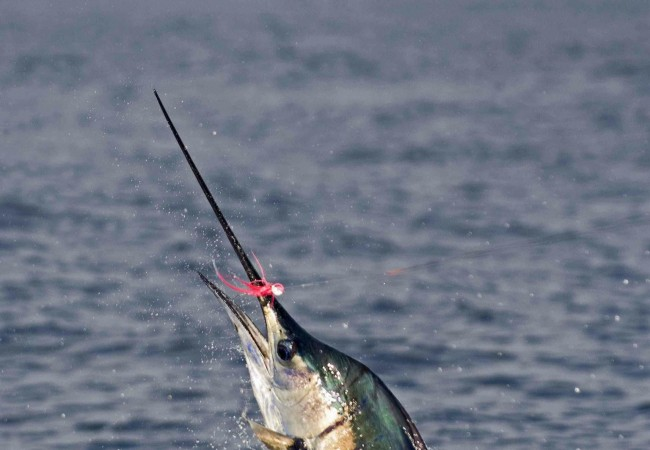 Alphonse Island Resort – Discounted Rods