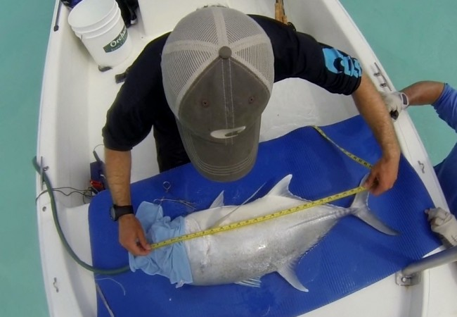 Bonefish and Giant Trevally Research Published in Flylife Magazine