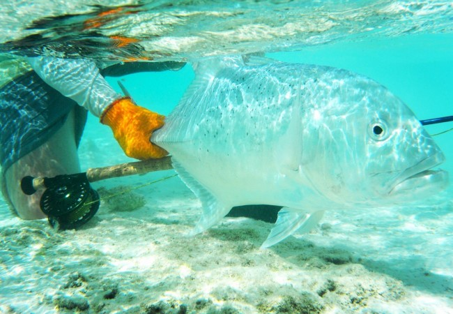 Fly Fishing Palmyra Atoll – A gem of the Pacific