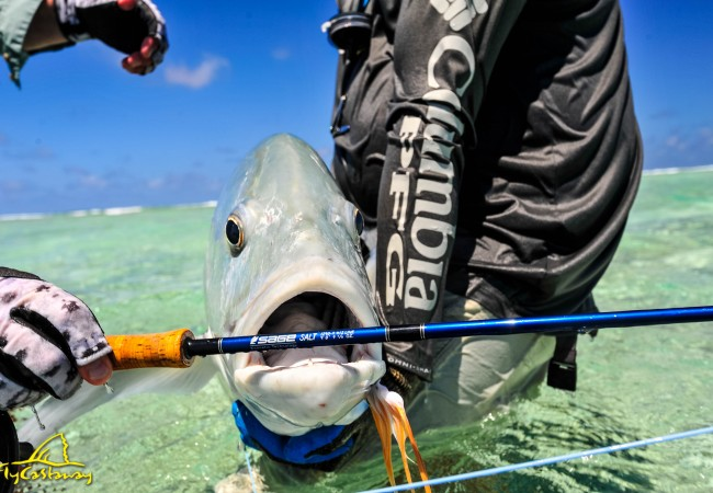 Client Testimonial – Fly fishing St Brandon's atoll